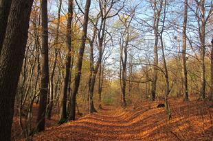 10 ok, ami miatt kihagyhatatlan Miskolc idén ősszel