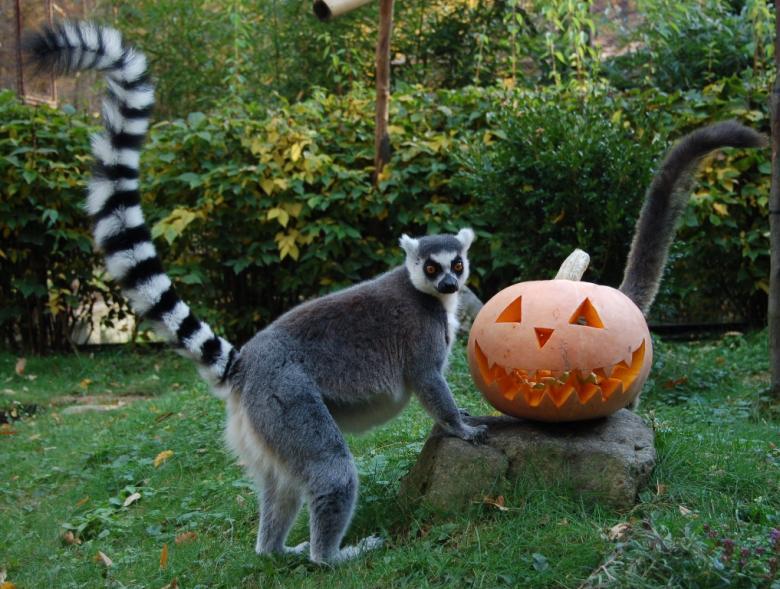 halloween_katta_copyright_krajnyak_zoltan.jpg
