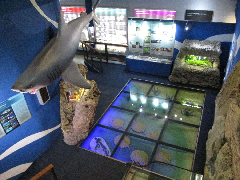 pannon-tenger_20160716_ks_4_cut.jpg