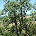 Francia-magyar tapasztalatcsere a hagyományos gyümölcsfajtákról