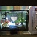 Ritka öröm!!!! Vadásztársaságot talált mikrosütőjében a kisnyugdíjas!