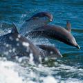 Delfin metafora 5. Eltérő pszichológiai szerződések