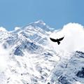 Tibi a hegyen marad