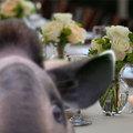 HírCsárda gasztro: esküvői menü