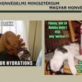 Domaineket szüntetett meg a Fidesz