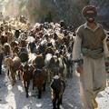 Apple Watch-riválist szart egy albán kecskepásztor