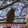 A KSH szerint 2019-re megölhetik egymást a magyarok