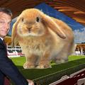Döbbenet Felcsúton! Focistákat tojt a nyúl az új stadionba