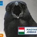Rezsiharc: végre lehet varjút enni