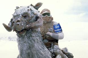 Villamospótló tauntaunokat állít forgalomba a BKK