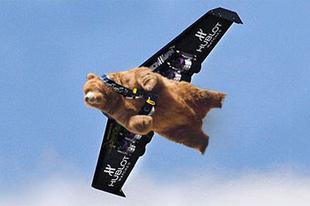 A NASA is besegít a túlszaporodott romániai medvék kilövésébe