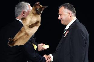 Táncsicska-díjat kapott Szaniszló Ferenc