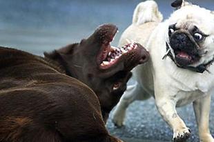 Ebadó-csalók tanítják nyávogni a kutyákat