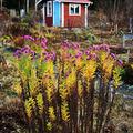 Még nyílnak a kertben az őszi virágok