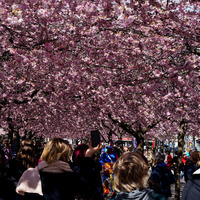 Tavasz Stockholmban (3)