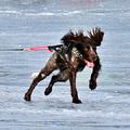 Mondo cane - Kutyavilág