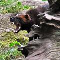 Kitalálós poszt: Egy vadállat