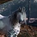 Merlin kalandjai 1x11 - A labirintus