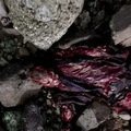 Dr. Csont 4x16 – Habzó csontok
