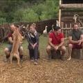 A Farm 2x59 - Unalom