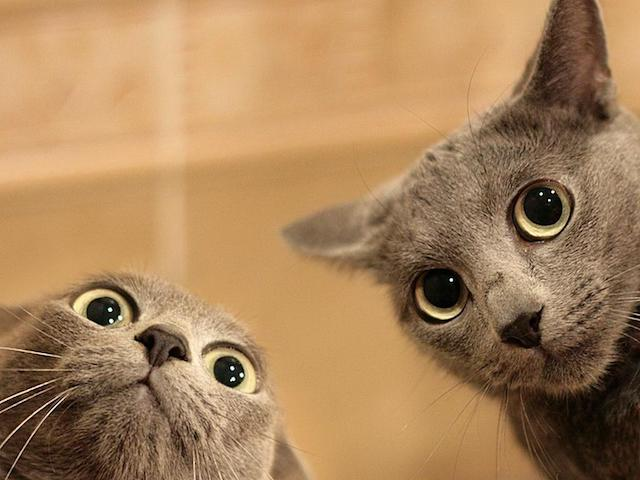 funny-animal-wallpapers-picture-is-cool-wallpapers_1.jpg