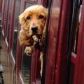 Kicsimmel vonaton Balatonra
