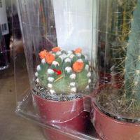 Növénykínzás: művirágot nyársalnak a katuszra a Bauhausban