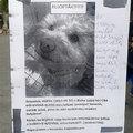Kutyát loptak a CBA elől