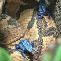 Lachesis, a sokoldalú, csábos, gyógyító kígyó