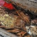 Nem találták meg Attila hun király sírját