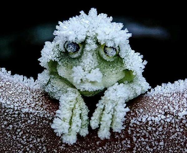frozen_frog_fake.jpg