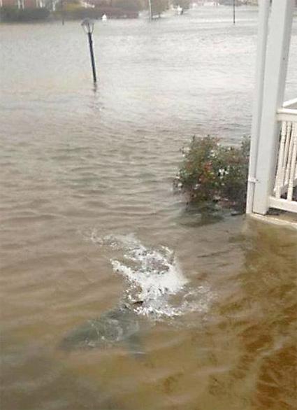 shark-in-front-yard.jpg