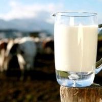Meg kell erősíteni a magyar tejágazatot