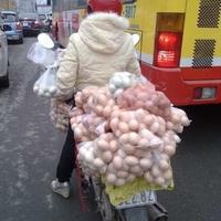 Variációk tojásszállításra