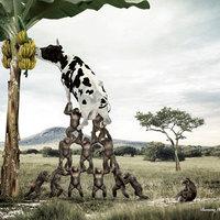Hogyan reklámozzunk banán ízű tejet?