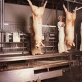 A prémiumtermékeké a jövő a sertéságazatban