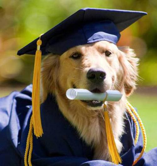 graduating_dog.jpg