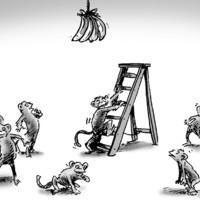 Az 5 majom története - emberkísérlet