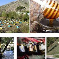Hegyi méz a hangák és fenyvesek világából a havasokból