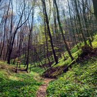 Kisvasút és remetelányok: a Balaton-felvidéknek még sok titka van