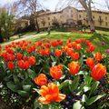 10 kérdés, amit mindenki megkérdez a hévízi virágokról!