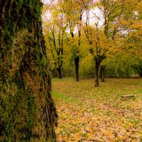 Napikép: Photographer - Fa mögül az ősz