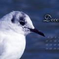 Indafotó NAGYKÉPES háttérképek: 2012 december