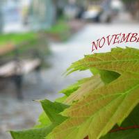Indafotó NAGYKÉPES háttérképek: november