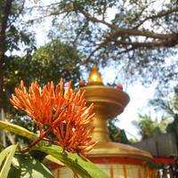 Egy hangos és laktató indiai templomfesztivál – avagy miért kelek 4:30-kor egy hete