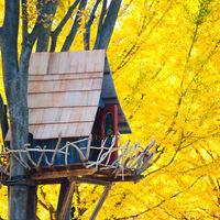 Gyönyörű faházak a világ minden tájáról