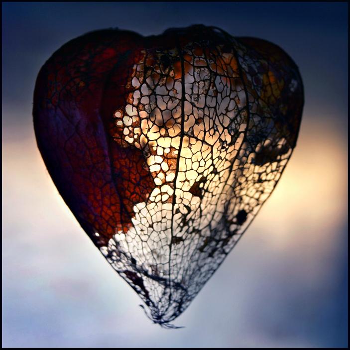 empty_heart_by_astranat-d33s3bw.jpg