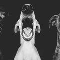 Szenzációs kutyaportrék