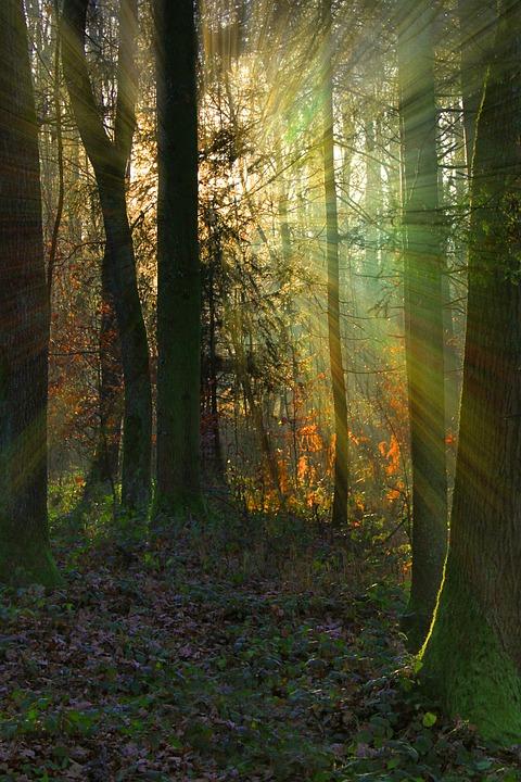 forest-947822_960_720oszi_erdo_iii.jpg