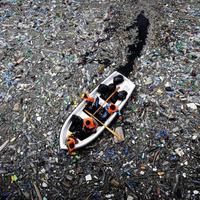 Szemétsziget lakói: a műanyagnassoló halak